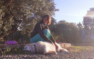 5 tips naar meer adem-ruimte voor je hond