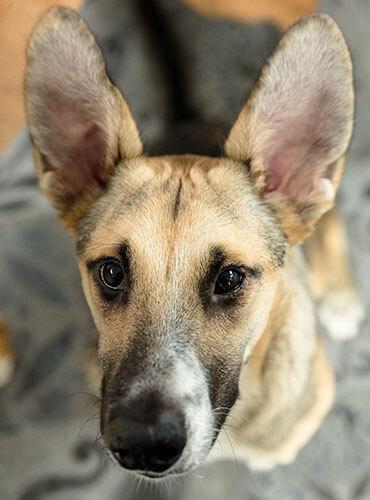 Dierencommunicatie-Slow-Living-Animals-Chico